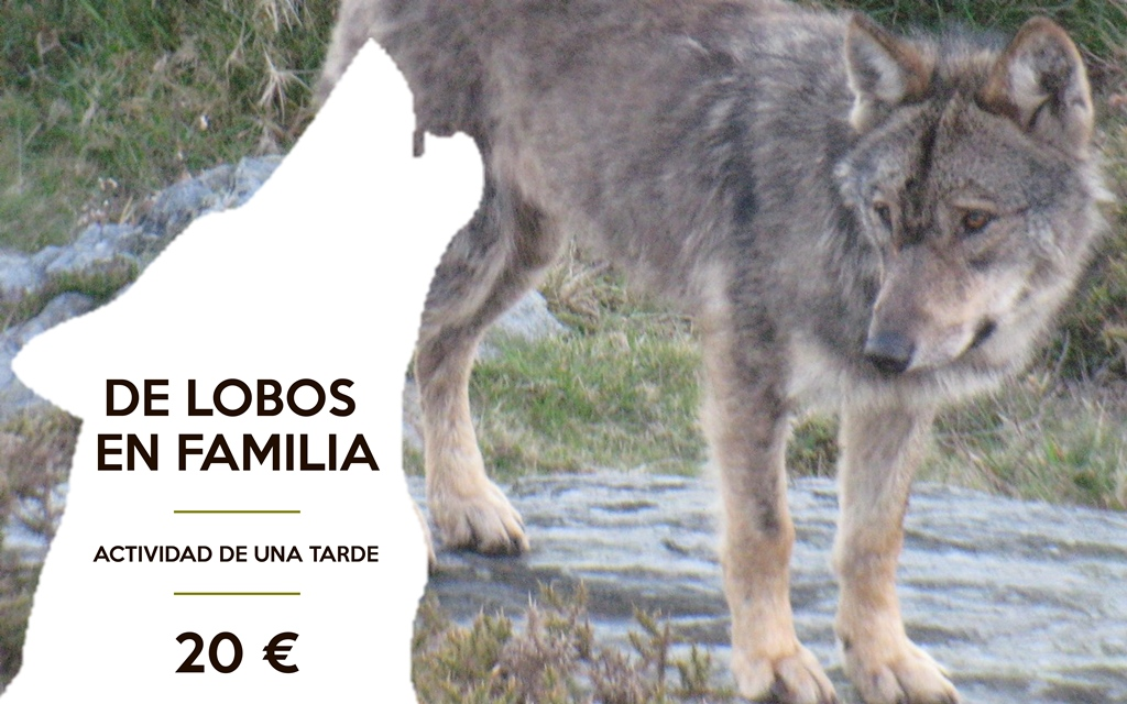 educación ambiental, lobo, ver lobos zamora, cursos lobo, sierra de la culebra, zamora, sanabria, lobo, cursos lobo, lobo ibérico, iberian wolf, ecoturismo,  observación lobo en zamora, educación ambiental lobo, ecotourism, ecoturismo, ver lobos sierra de la culebra, españa