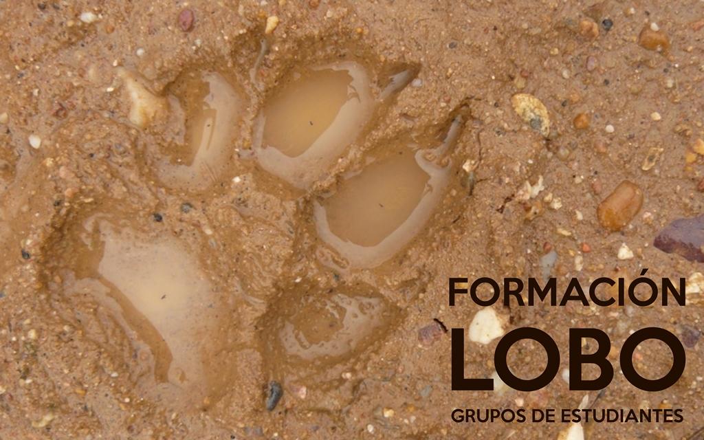 FORMACIÓN COMPLEMENTARIA LOBO GRUPOS DE ESTUDIANTES FP universitarios asociaciones www.llobu.es