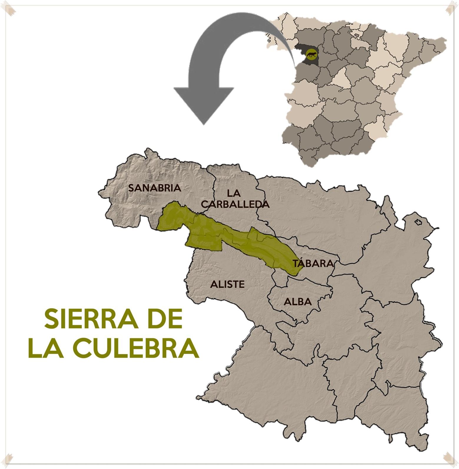 Llobu Observacion De Lobo Iberico En La Sierra De La Culebra
