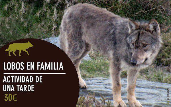 lobos en familia